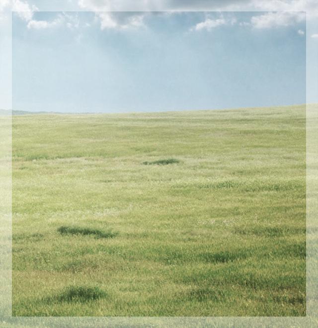 grass field indicating comfort